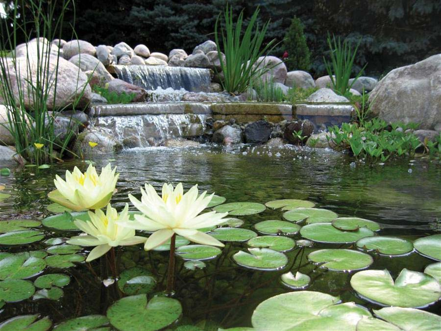 waterfall pond with yellow flowers